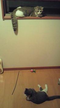 NEC_0419.jpg